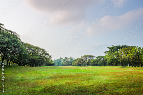 Fotobehang Bangkok Green grass field with tree in Public Park