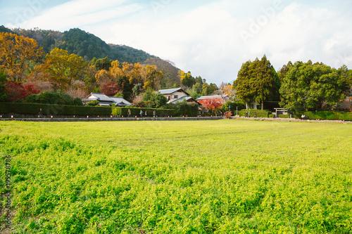 Fotobehang Kyoto Old village and green meadow in Kyoto Arashiyama, Japan
