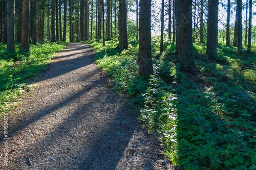 Fotobehang Weg in bos Wald mit Weg