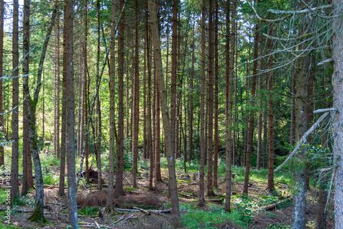 In de dag Olijf Wald