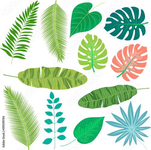 Tropikalni liście ustawiający odizolowywającymi na białym tle