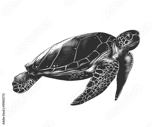 Vector engraved style illustration for posters, decoration and print. Hand drawn sketch of turtle in monochrome isolated on white background. Detailed vintage woodcut style drawing.