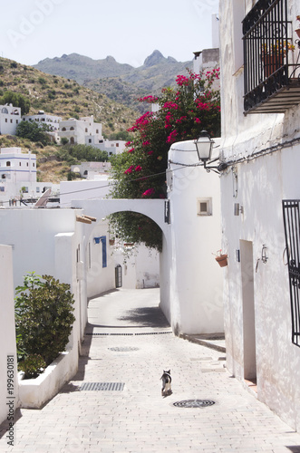deserted street of andalusian village with white houses and a cat © javiemebravo