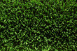 Overhead view of fresh green grass