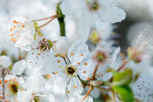 Spring - 199638174