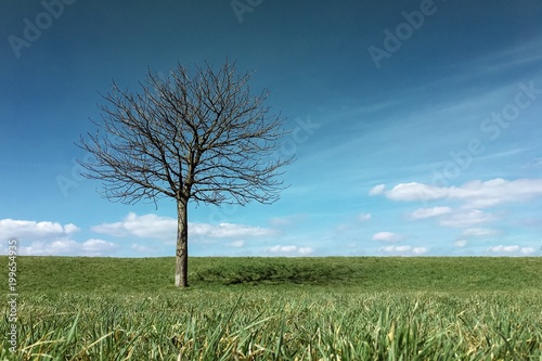 Green hill with tree and blue sky
