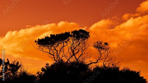 Fotobehang Oranje eclat sunset, sky, clouds, sun, landscape, sunrise, nature, orange, cloud, evening, red, trees, dusk, silhouette, tree, light, forest, morning, yellow