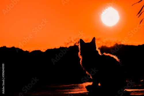 Poster Oranje eclat sunset, sky, sun, clouds, orange, nature, landscape, sunrise, evening, dusk, red, silhouette, cloud, mountain, summer, light, blue, night, morning, twilight, black