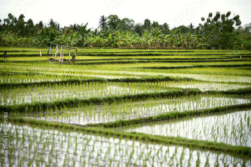 Fotobehang Guilin Rice terraces landscape