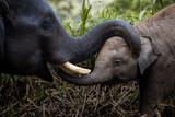 Love of elephants