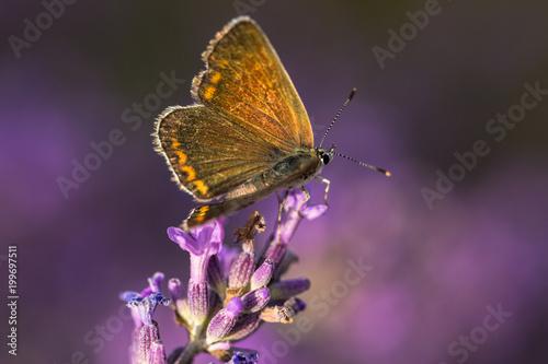 Foto Murales papillon