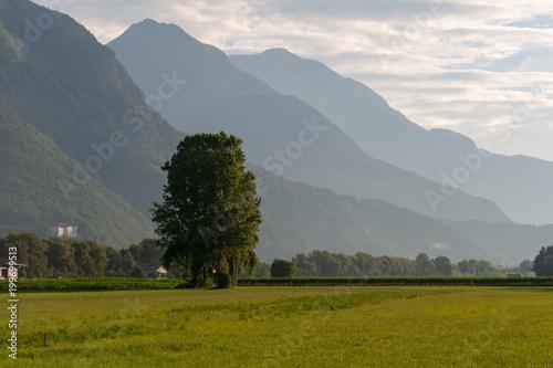Fotobehang Donkergrijs Hügellandschaft mit Baum