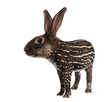 chimera with Belgian Hare and body of a tapir against white background