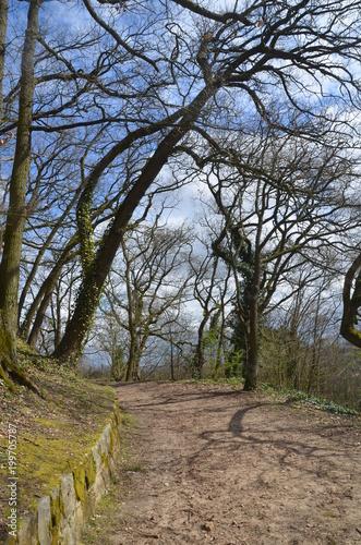Fotobehang Weg in bos Chemin