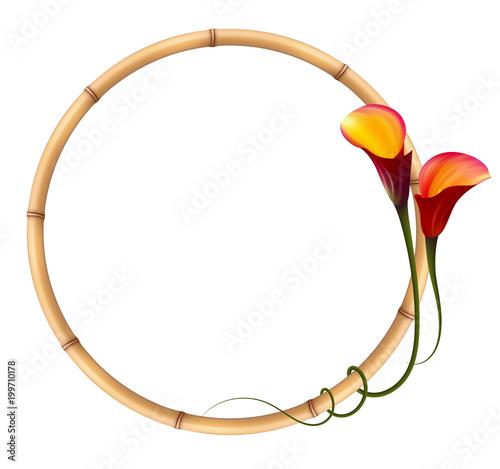 Realistyczne czerwony calla lily, rama bambusa. Symbol przyciągania i męki.