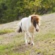 Cavallo - 199717590
