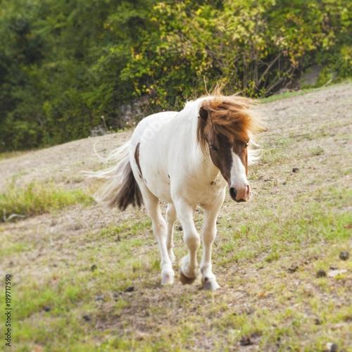 Fotobehang Paarden Cavallo