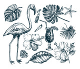 Summer set. Ink hand drawn collection of tropical plants leaves, flowers, seashells, flamingo bird. Botanical and tropical elements for design, Vector illustration. - 199720384
