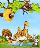 Wildlife animals scene