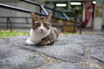 A street cat in Singapore