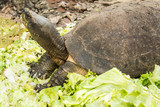Turtles is amphibian one of the oldest reptile groups and an ancient group
