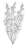 Gladiolus flower graphic black white isolated bouquet sketch illustration vector - 199756141