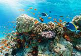 Farbenfrohes Korallenriff mit tropischen Fischen im Indischen Ozean, Malediven