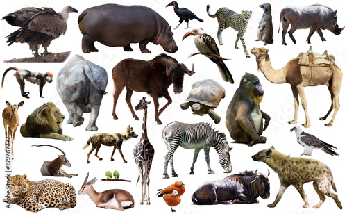 Aluminium Bison Birds, mammal and other animals of Africa isolated