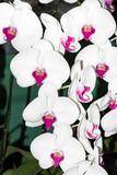 Orchid brunch