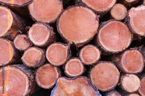 Foto op Aluminium Brandhout textuur Holzstapel im Wald