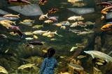 Child looks at the sea fish in aquarium
