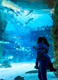 Family looks at sharks in beautiful blue aquarium