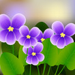 Spring background with blossom brunch of violet flowers.