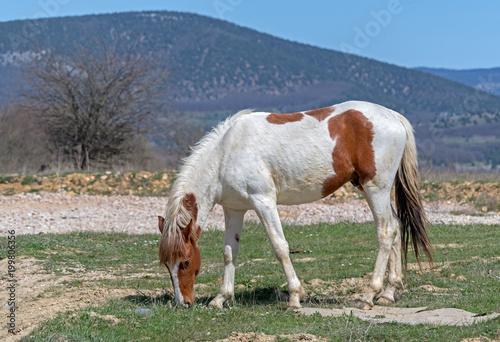 Fotobehang Paarden horse grazing on the meadow