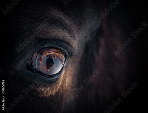 Fotobehang Paarden Beautiful horse eye
