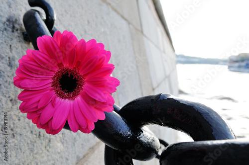 Aluminium Gerbera Pink gerbera and a large black chain on a stone quay.