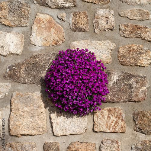 Foto Murales L'aubriète dans le mur