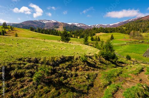 Fotobehang Pistache beautiful Carpathian countryside in springtime