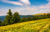 forested hills and meadows of Svydovets ridge. lovely summer landscape of Carpathian mountains in afternoon
