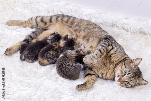 Baby cat and mother cat - 199821943