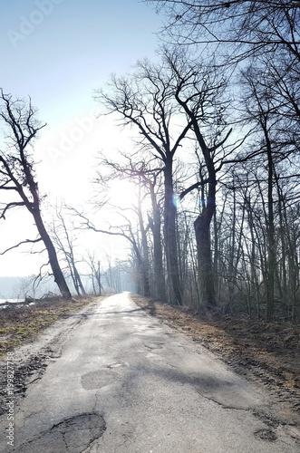 Fotobehang Weg in bos Szosa