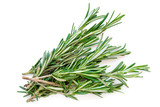 Isolated Rosemary herb. Fresh green rosemary bunch isolated on a white background. Top view. Flat lay.