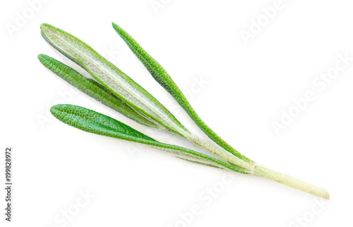 Isolated Rosemary herb. Fresh green rosemary isolated on a white background. Top view. Flat lay.