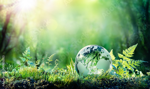 Leinwanddruck Bild Globe On Moss In Forest - Environmental Concept