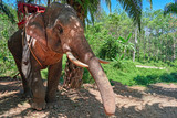 Portrait elephant with a seat on his back on a background of palm trees and jungle.