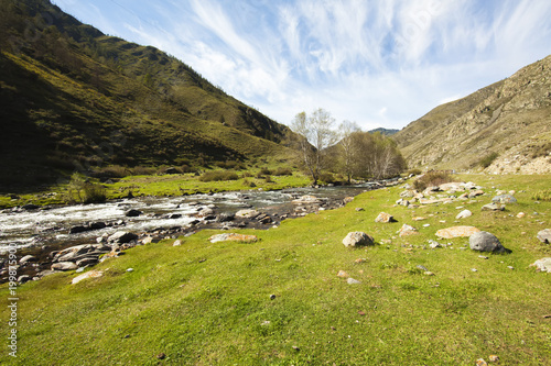Fotobehang Pistache Mountain river going through green valley on a summer sunny day with beautiful white clouds in the sky, Altai