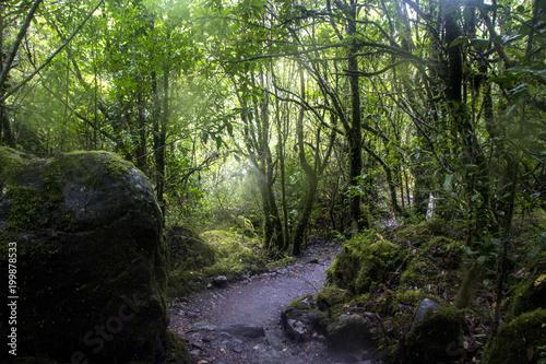 Fotobehang Weg in bos Parque Queulat