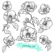 Set of camellia. Vector illustration - 199880349
