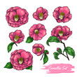 Set of camellia. Vector illustration - 199883966