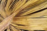 Dry palm leaf - 199887705